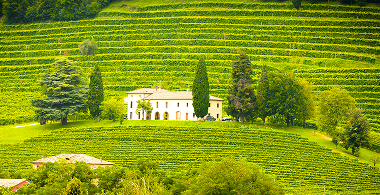 SERVICES–WINERIES US